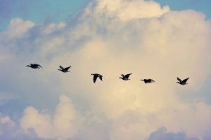 Six tips to migrate multilingual content